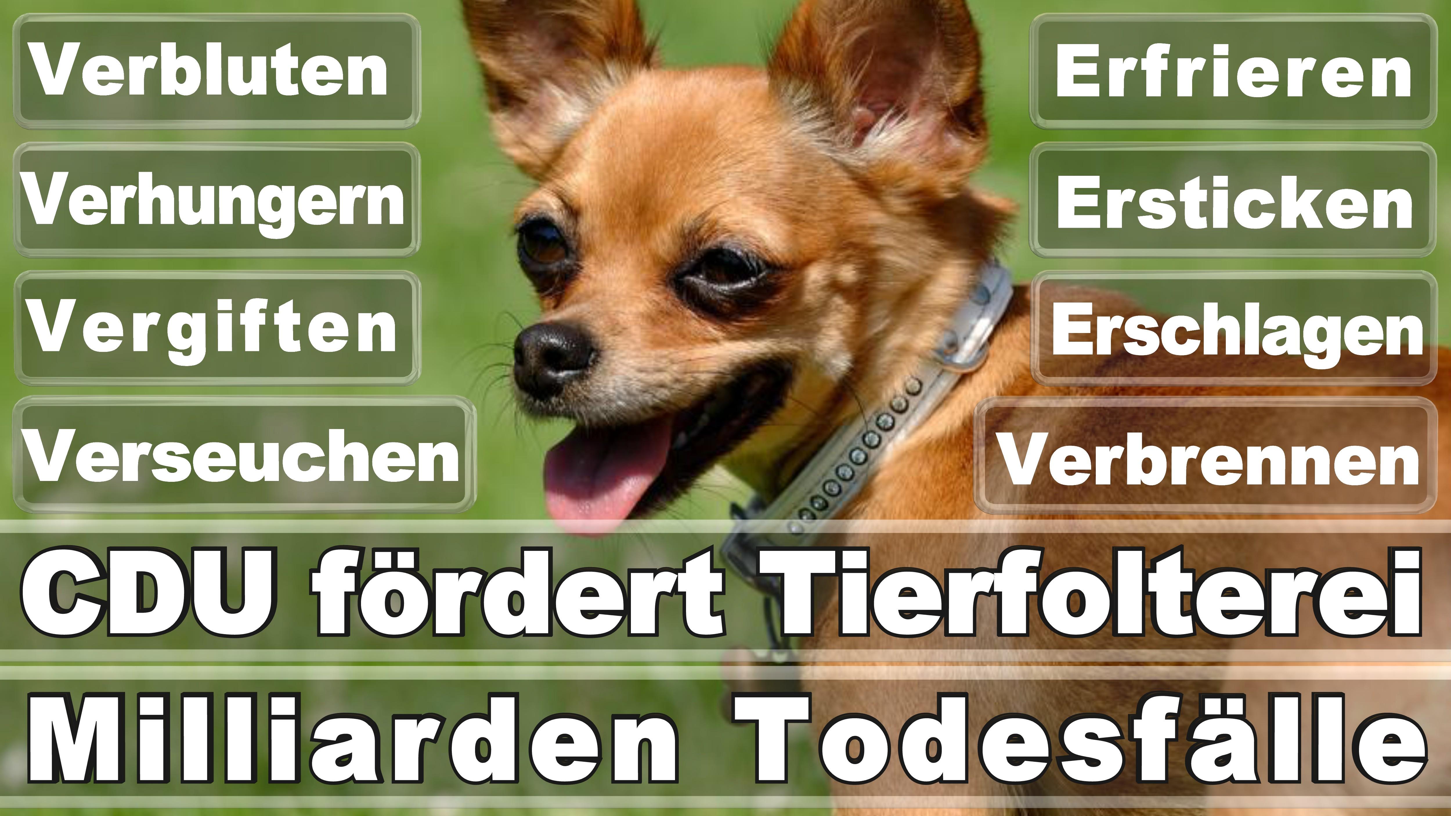 Bundestagswahl 2017 Германия Выборы Плакаты Ангела Меркель Победитель Проигравший