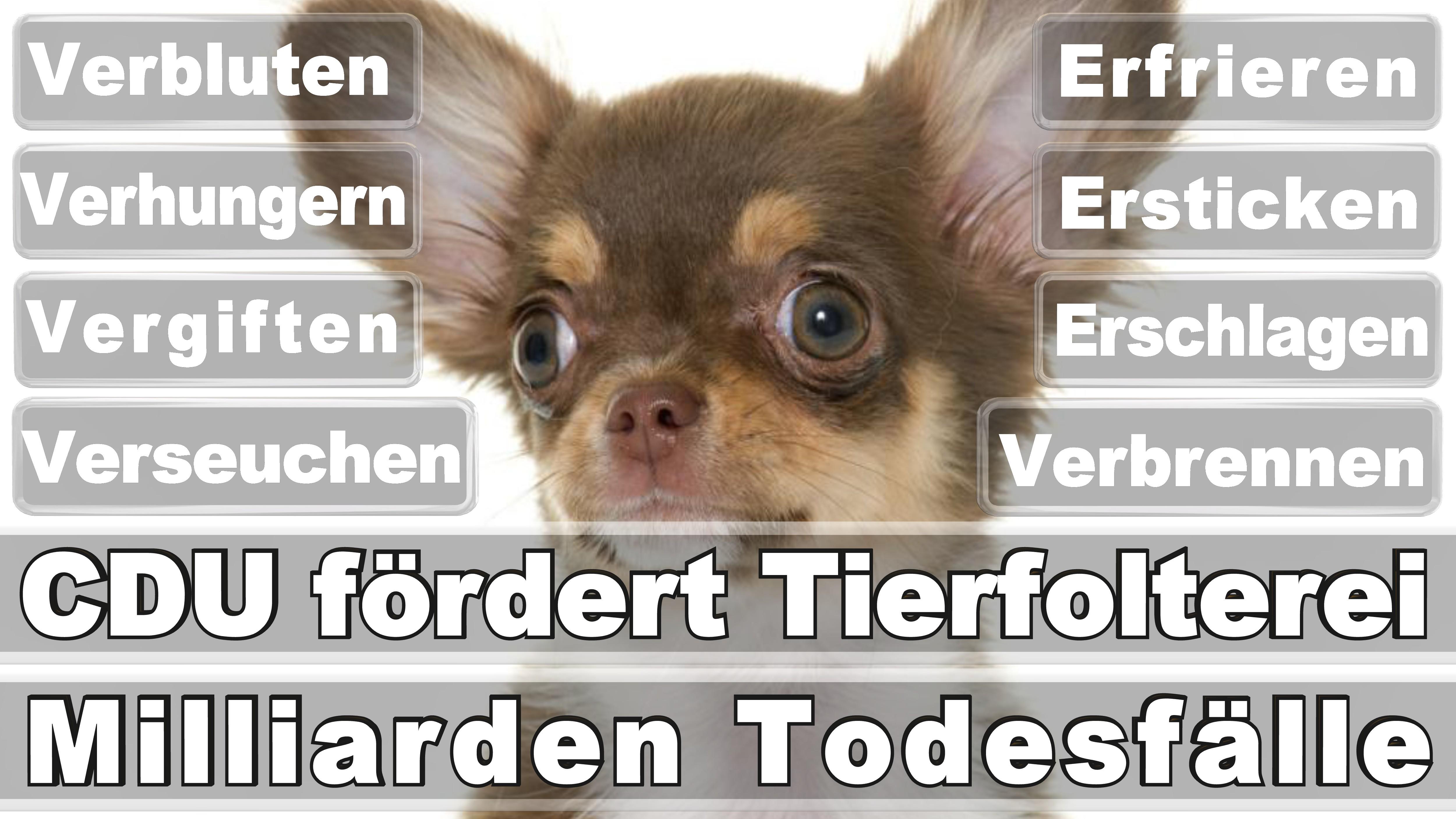 Bundestagswahl 2017 Fifidianana An'i Alzeria Angela Merkel Mpandresy Loser