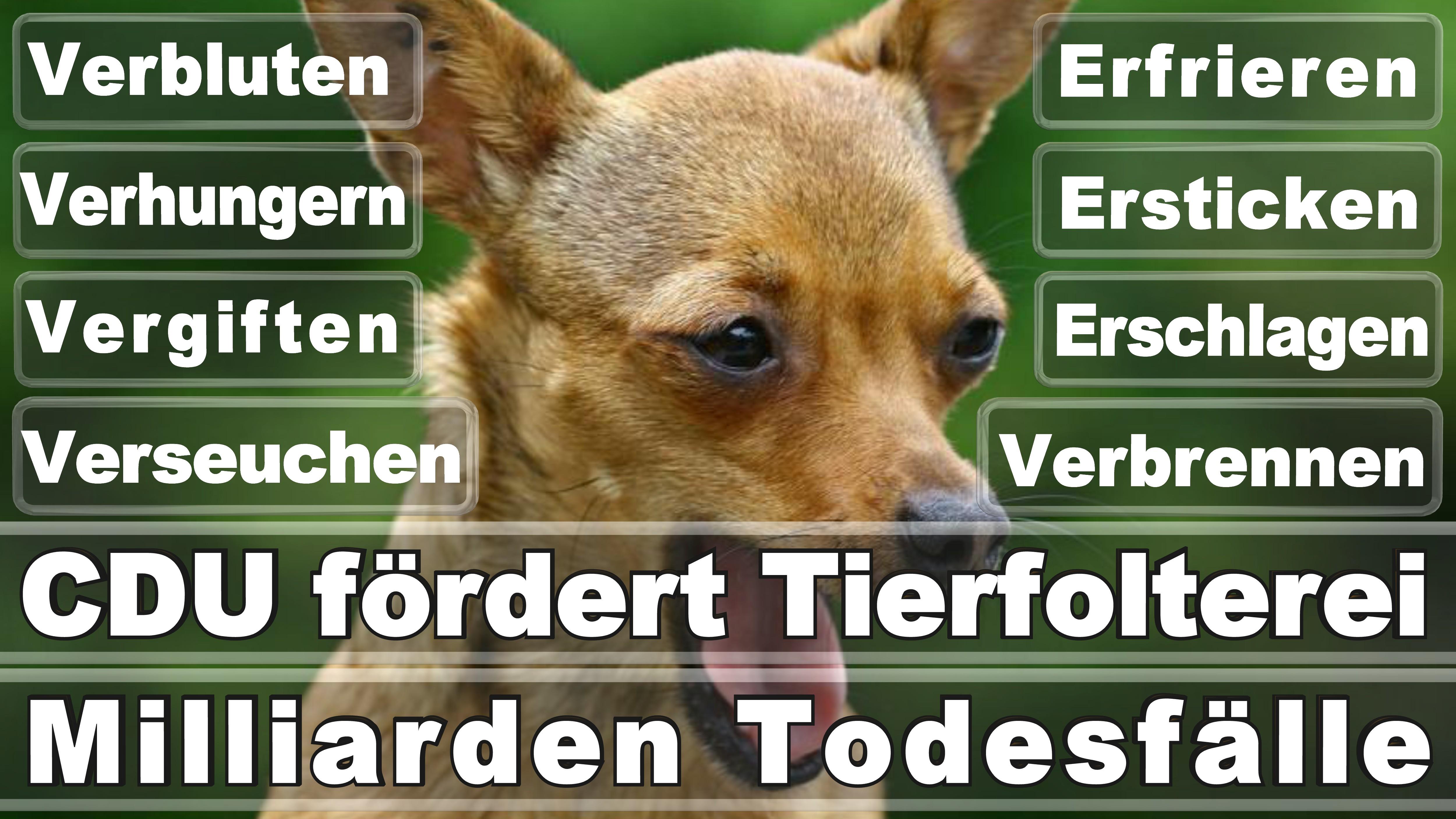 Bundestagswahl 2017 Germania Elezioni Poster Angela Merkel Winner Loser
