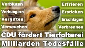 Bundestagswahl 2017 Germania Alegeri Postere Angela Merkel Câștigător Loser