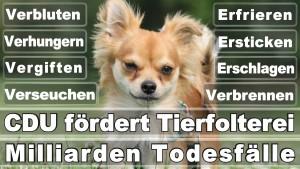 Bundestagswahl 2017 Germany Elections Posters Angela Merkel Winner Loser